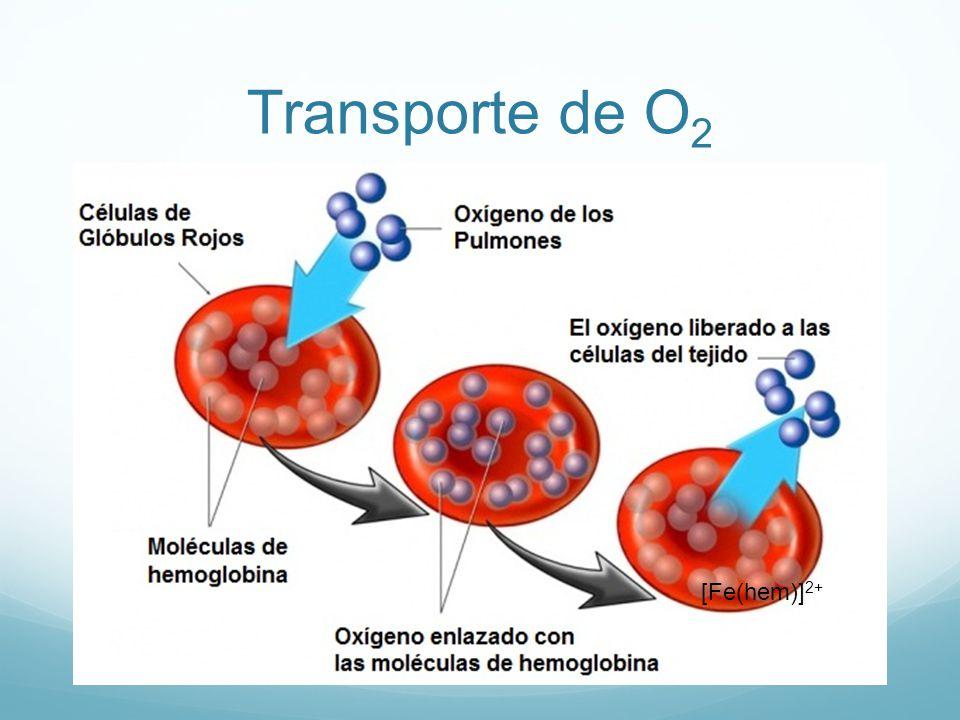 Transporte de O2 [Fe(hem)]2+